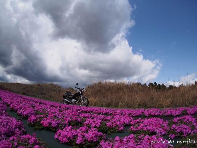 芝桜と雨雲とオートバイ