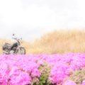 芝桜と、バイク写真☆YAMAHA SR125