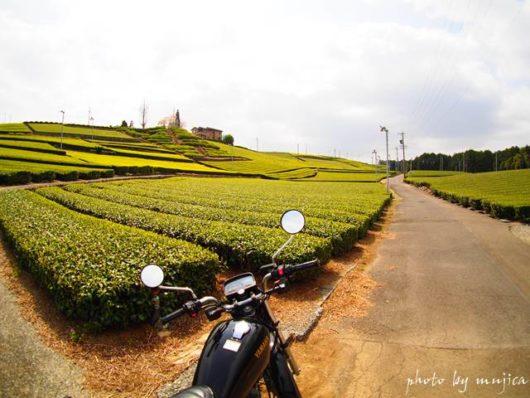 春の茶畑とオートバイ