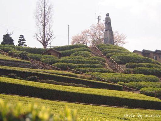 中条景昭像公園と春の茶畑