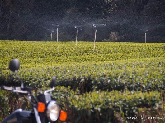 茶畑のスプリンクラーとオートバイ