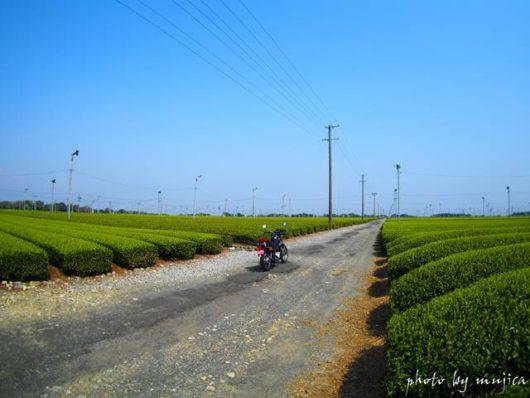 牧之原大茶園とオートバイ