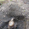【庭木の伐採と移植】庭にバイク保管庫ができるまで