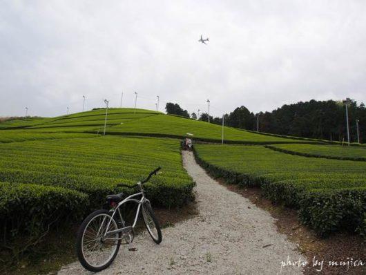 茶畑とビーチクルーザーのある風景