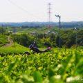 新緑の茶畑とバイクのある風景☆YAMAHA SR125