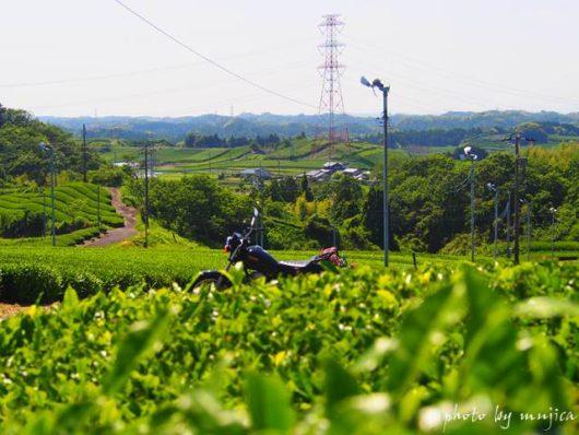 茶畑とバイクのある風景
