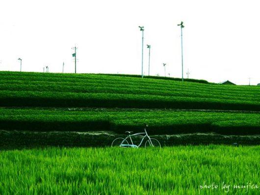 水田と茶畑とビーチクルーザーのある風景