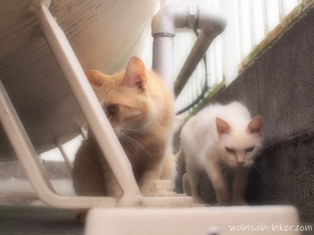 警戒する野良猫たち