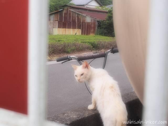 キックスクーターに近付く白猫