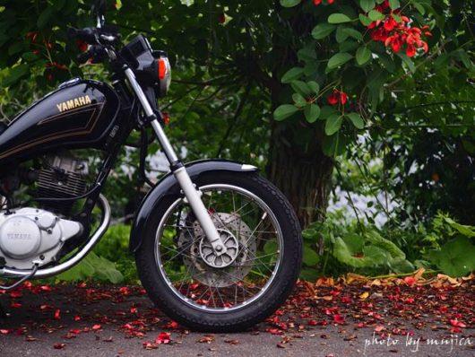 アメリカデイゴとオートバイ