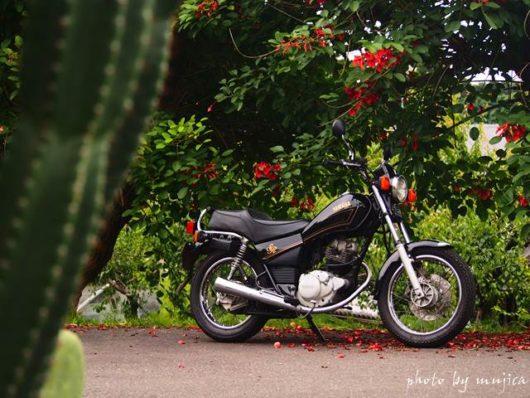 サボテンとアメリカデイゴとバイクのある風景