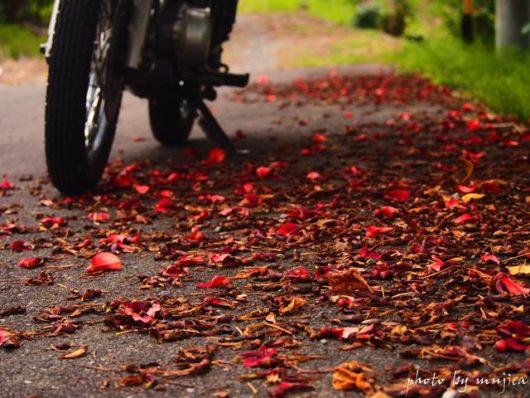 落ち花とバイクのある風景
