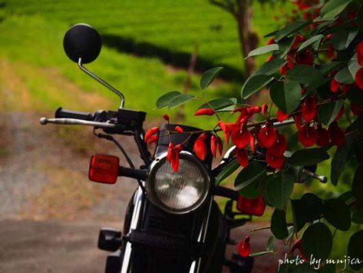 アメリカデイゴとバイクのある風景