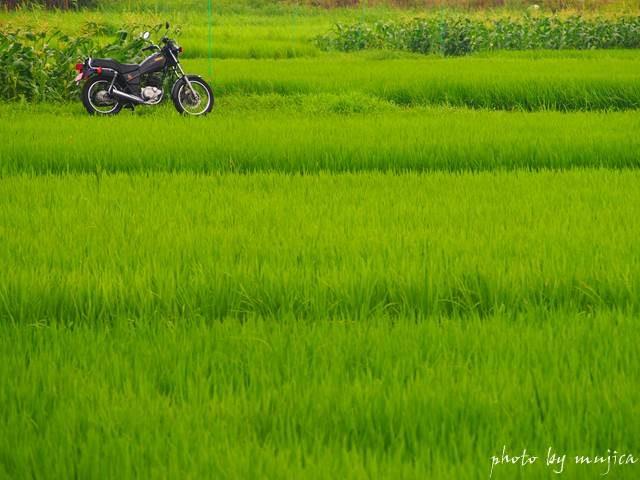夏の田畑とバイクのある風景