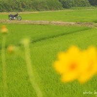 野花咲く田園とバイクのある風景