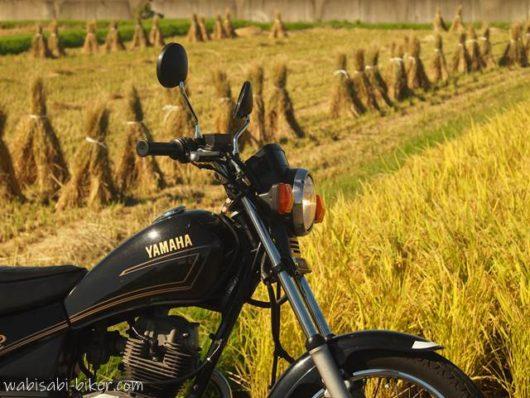 バイクと稲束