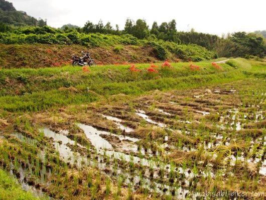 秋の里山とバイクのある風景
