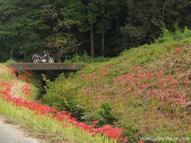 ヒガンバナと小さな橋とオートバイ