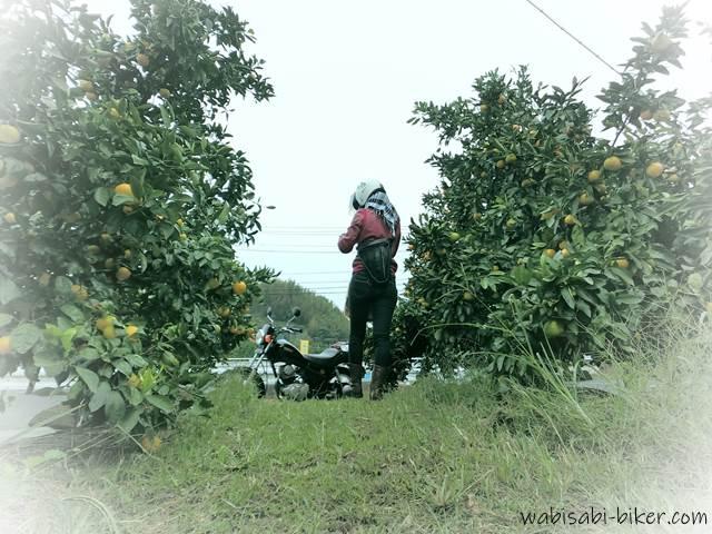 みかん畑でバイクと自撮り