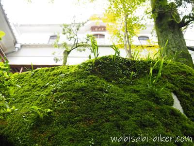 苔と青洲楼