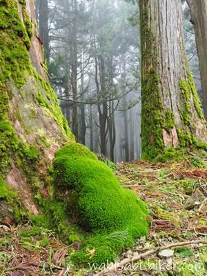 奥之院の苔