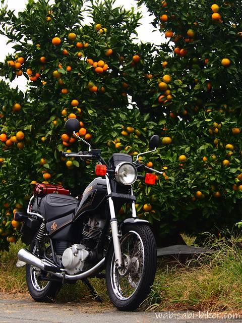 みかんの木とオートバイ