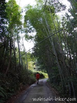 竹林の山道