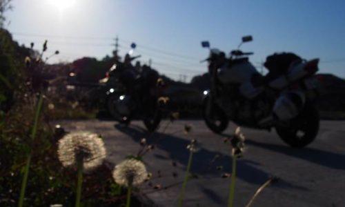 タンポポと2台のバイク