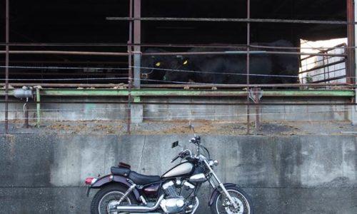 牛舎とオートバイ
