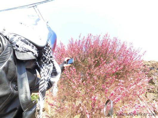 花を撮るライダー