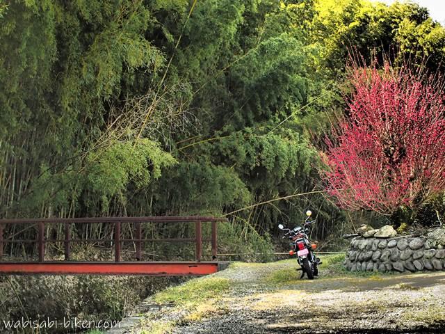 紅梅と赤い橋とオートバイ