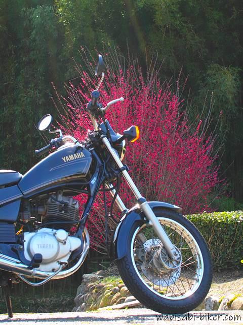 バイクと紅梅