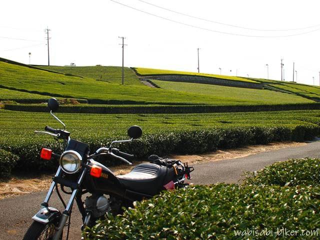 茶畑の新芽とオートバイ