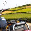 バイクで茶畑の新芽を見に行く☆YAMAHA SR125