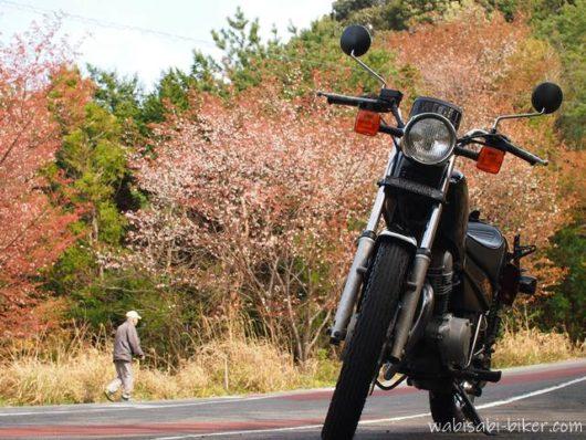 バイクと桜と散歩する男性