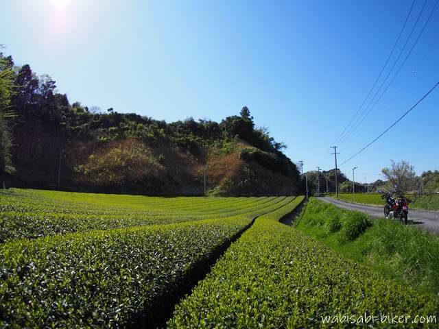 茶畑とオートバイのある風景