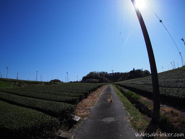 茶畑の小道