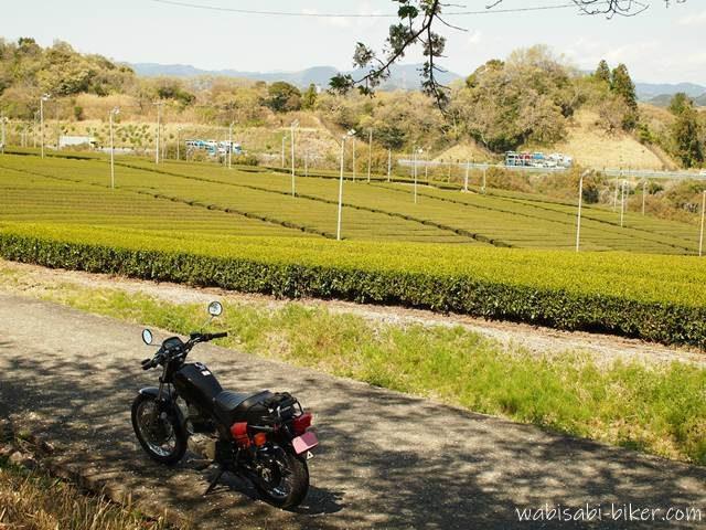 茶畑とオートバイと高速道路と桜