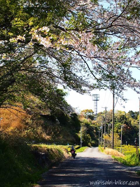 桜とオートバイのある風景