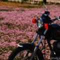 レンゲ畑で、バイク写真撮影☆YAMAHA SR125