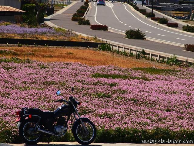 レンゲ畑とバイクのある風景