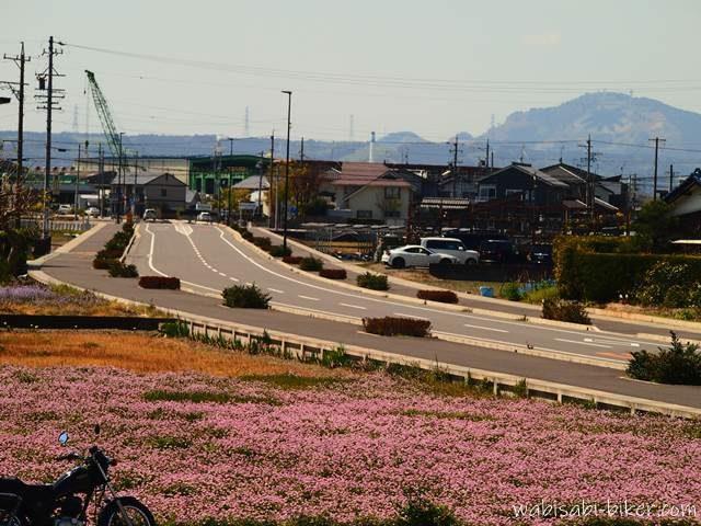 レンゲ畑と粟ヶ岳とバイクのある風景
