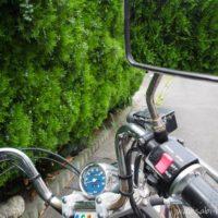 バイクとゴールドクレスト