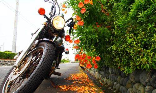 オートバイとノウゼンカズラ
