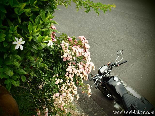 初夏の花とオートバイ