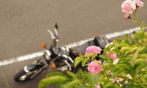 つるバラとオートバイ