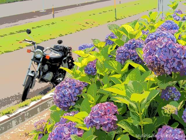 アジサイとバイクのある風景
