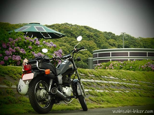 バイクと太陽光発電のアジサイ