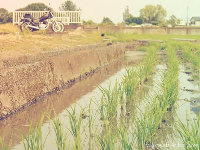 田んぼとバイクのある風景