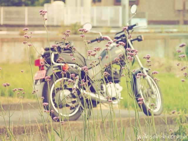 ヤナギハナガサとオートバイ